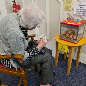 Easter chicks at Brookfield Care Home
